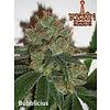 Resin Seeds Bubblelicious Fem 5 pk