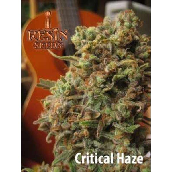 Resin Seeds Critical Haze Fem 5 pk