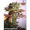 Resin Seeds Hammer Shark Fem 5 pk