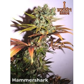 Resin Seeds Resin Seeds Hammer Shark Fem 5 pk