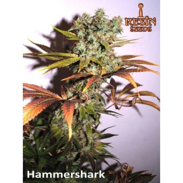 Resin Seeds Resin Seeds Hammer Shark Fem 5 pk
