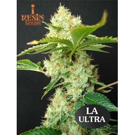 Resin Seeds Resin Seeds LA Ultra Fem 5 pk