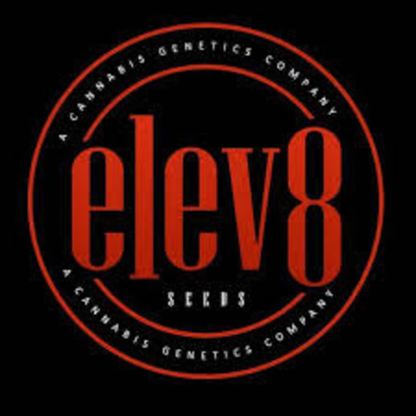 Elev8 Huckleberry Punch Fem 6 pk
