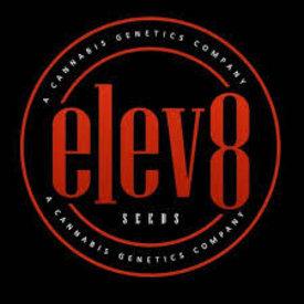 Elev8 Elev8 Genetics Kimbo Punch Fem 6 pk