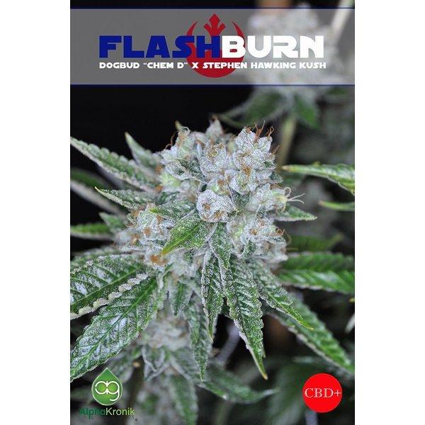 Alphakronik Force Flashburn Reg 5 pk