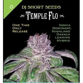 DJ Short Temple Flo Reg 13 pk