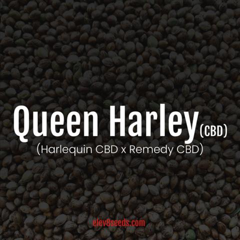 Queen Harley CBD Fem