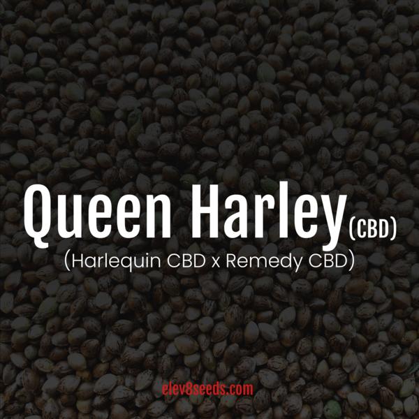 Elev8 Queen Harley CBD Fem
