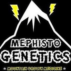 Mephisto Mephisto Genetics Canna Cheese Auto-Fem 7 pk