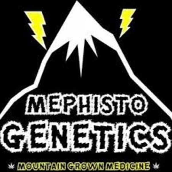 Mephisto Canna Cheese Auto-Fem 7 pk