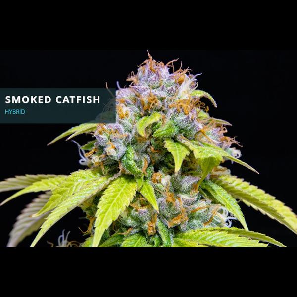 Midnight Roots Smoked Catfish Reg 10 pk
