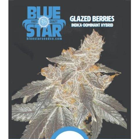 Glazed Berries Reg 13 pk(+5 Freebies Inside)
