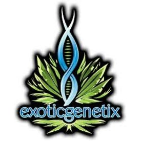 Exotic Genetix Galactic Runtz Fem 6 pk