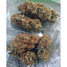 Seven Leaf Genetics Dutch Berry Diesel Reg 10 pk