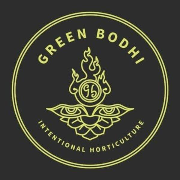 Green Bodhi Golden Pineapple x Sour 78 Reg 11 pk