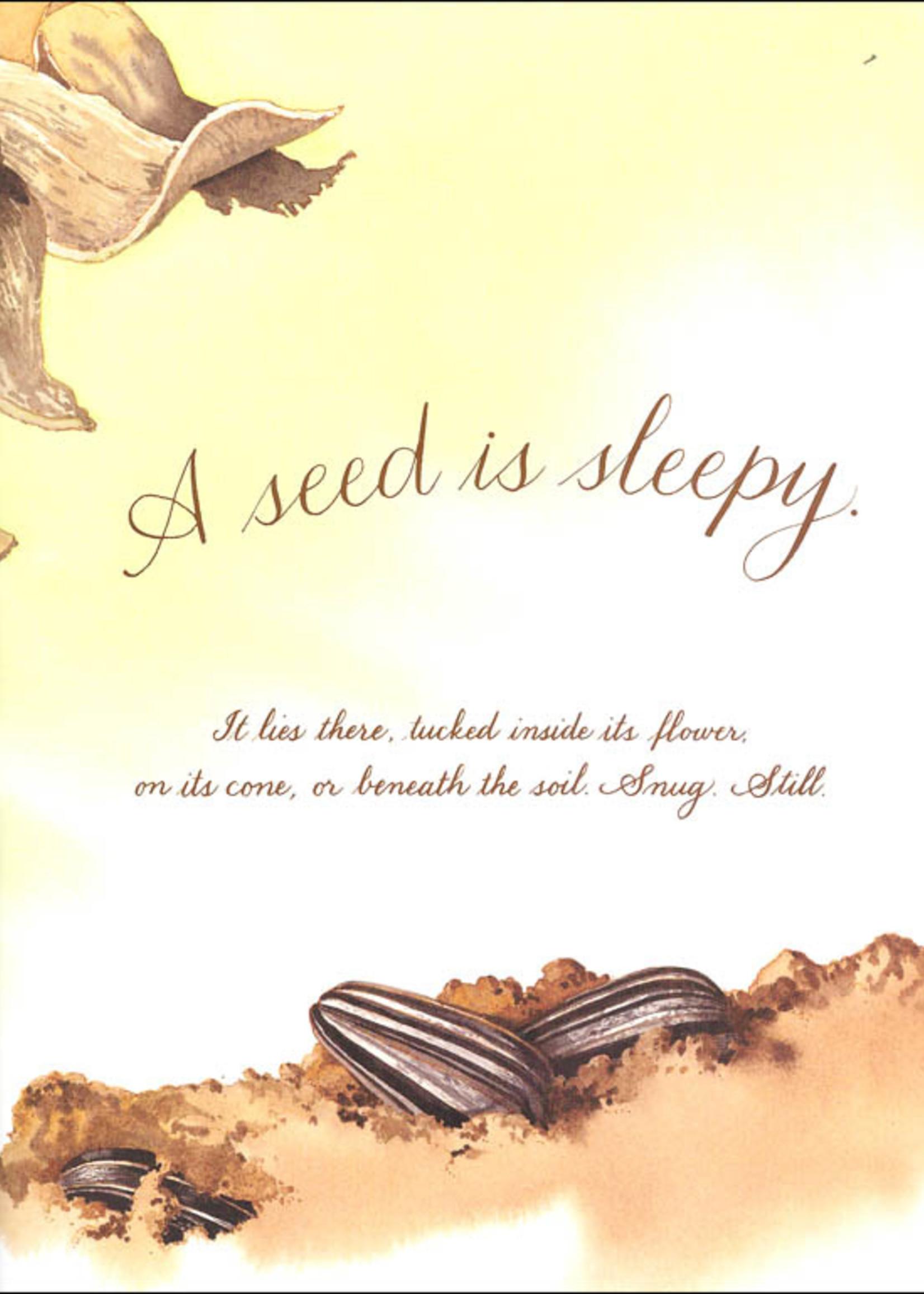 A Seed Is Sleepy - Paperback