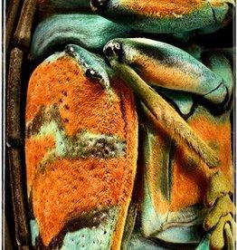 "Powell Peralta Powell Peralta Jewel Beetle Deck - 9"""