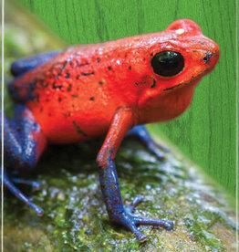 """Mini Logo Mini Logo Poisen Tree Frog Deck - 8.25"""""""