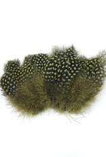 Nature's Spirit Jumbo Guinea -