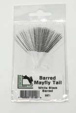 Barred Mayfly Tails -