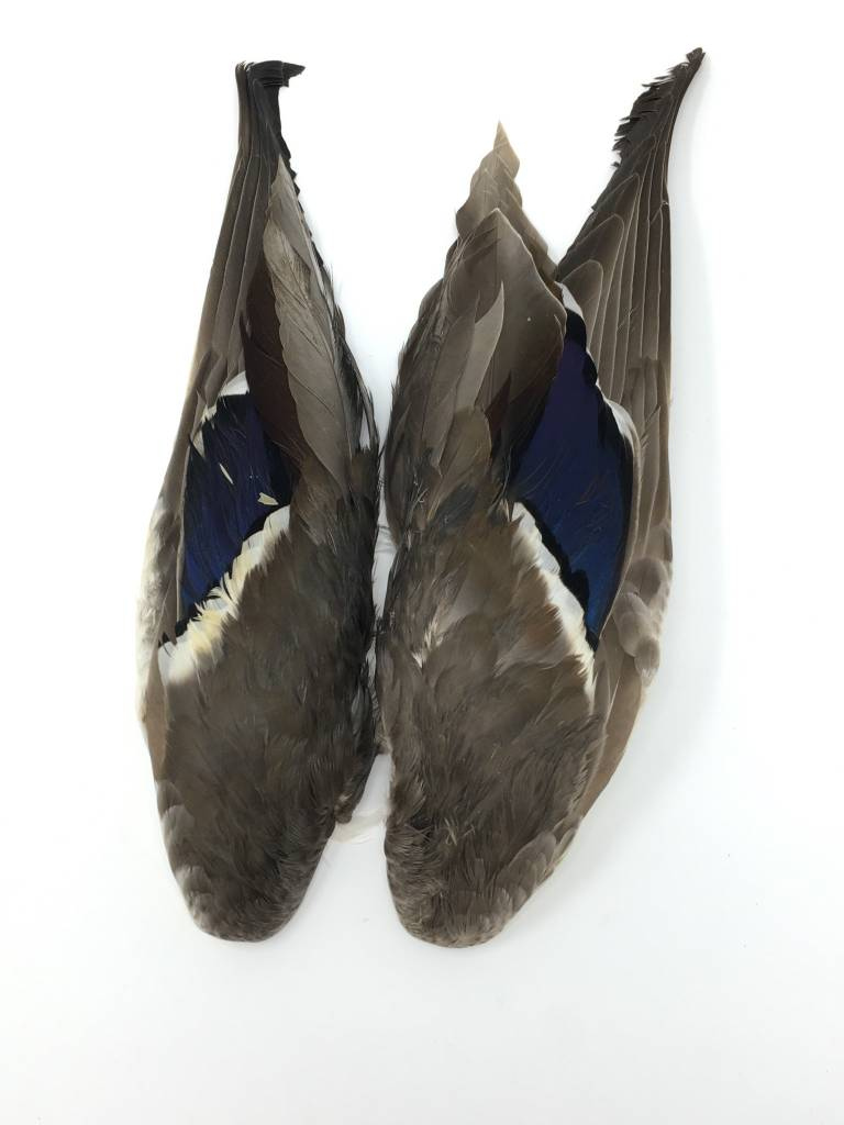 Fish Hunter Mallard Wings Paired