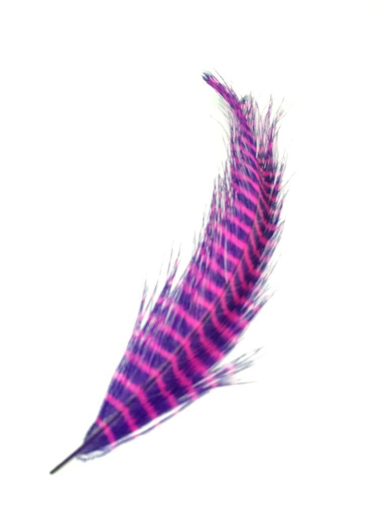 Fish Hunter Barred Rhea -