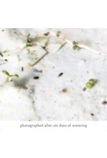 The Bower Studio Calendula Plantable Seed Paper Greeting Card