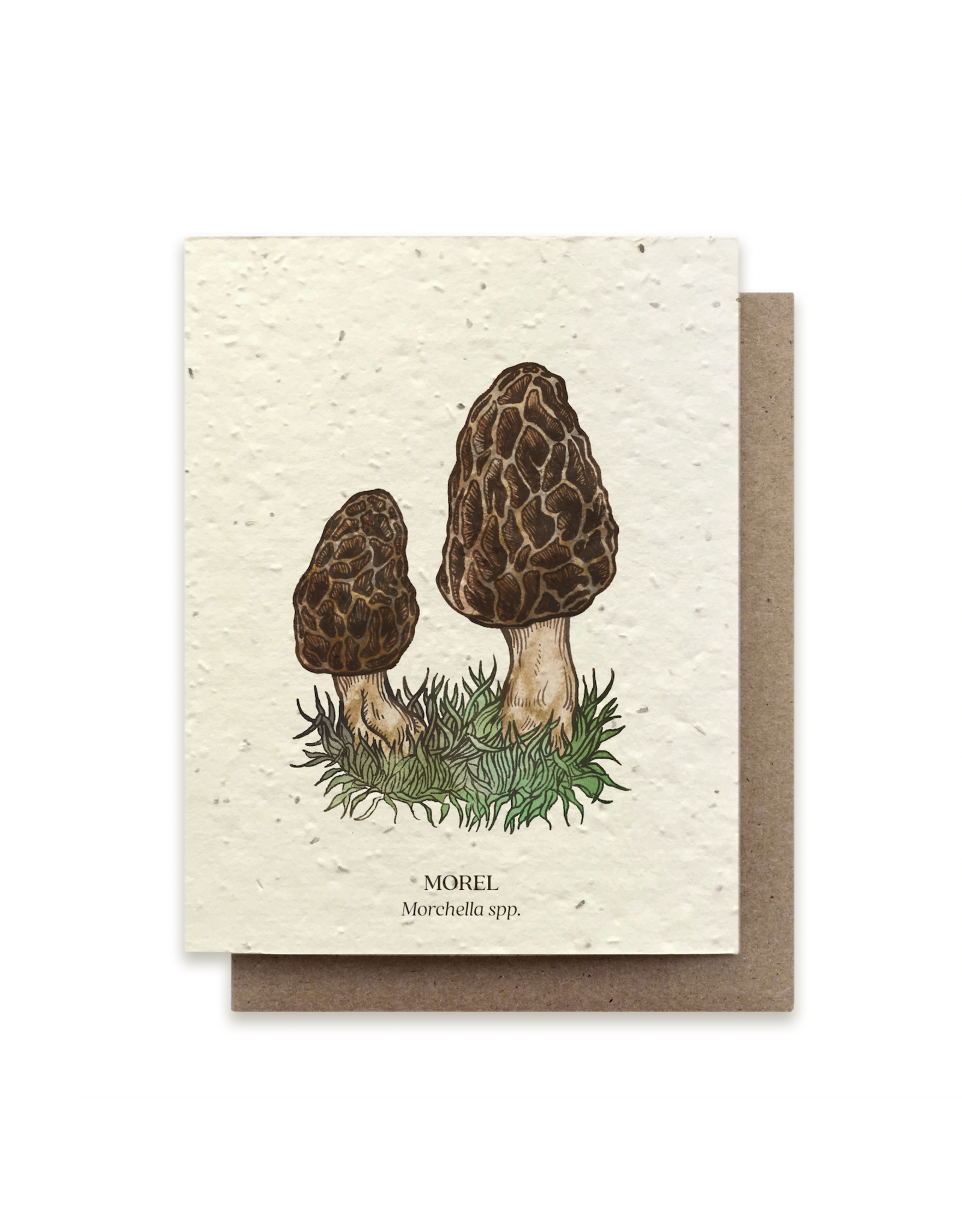 The Bower Studio Morel Plantable Seed Paper Greeting Card