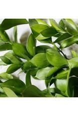 Vitruvi Vitruvi Tea Tree Essential Oil