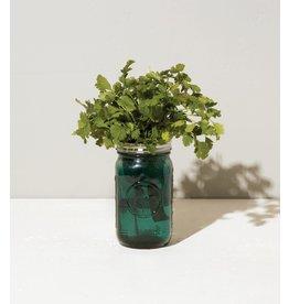 Modern Sprout Cilantro Garden Jar