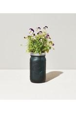 Modern Sprout Pansy Garden Jar