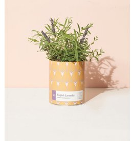 Modern Sprout English Lavender Grow Kit