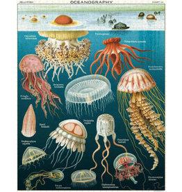 Jellyfish  Oceanography Puzzle