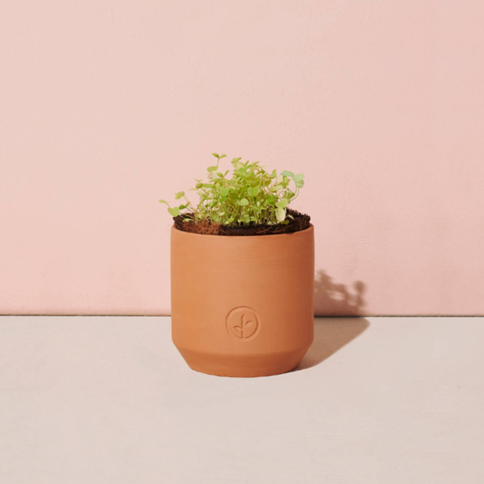 Modern Sprout Tiny Terracotta Grow Kits