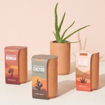 Modern Sprout Terracotta Grow Kits