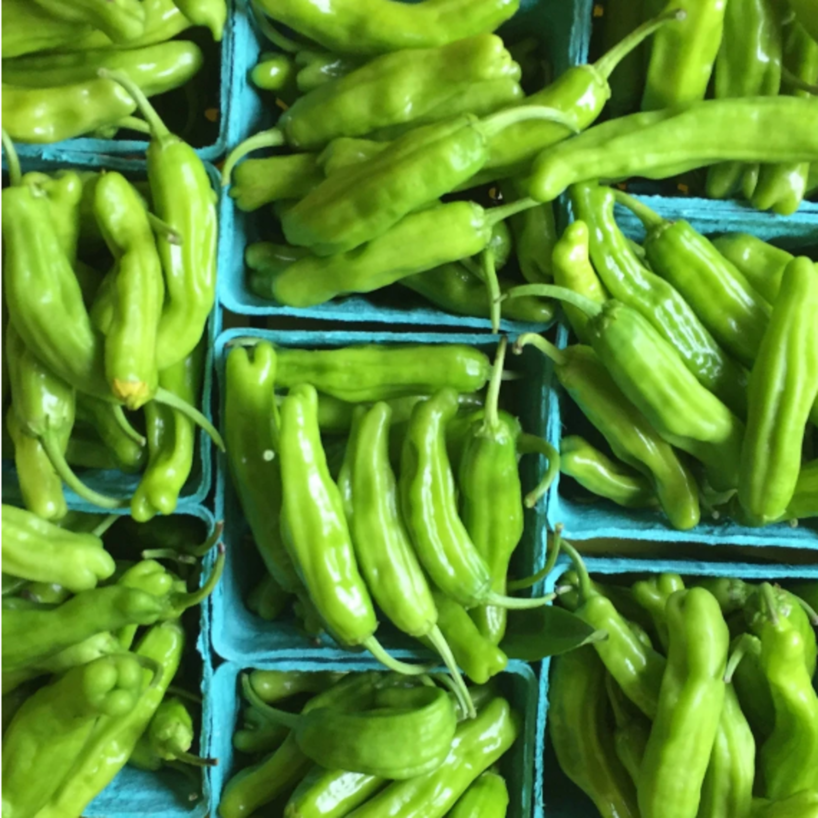 Hudson Valley Seeds Shishito Pepper Seeds