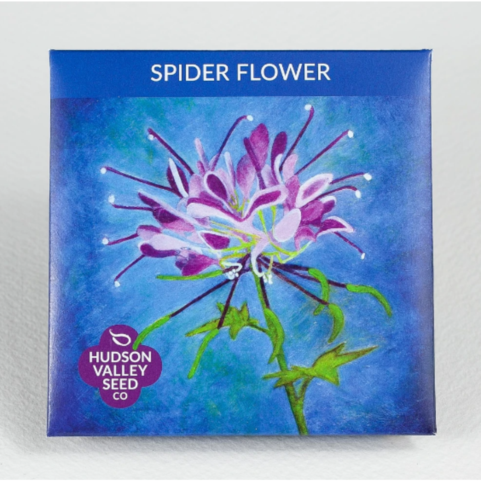 Hudson Valley Seeds Spider Flower Seeds