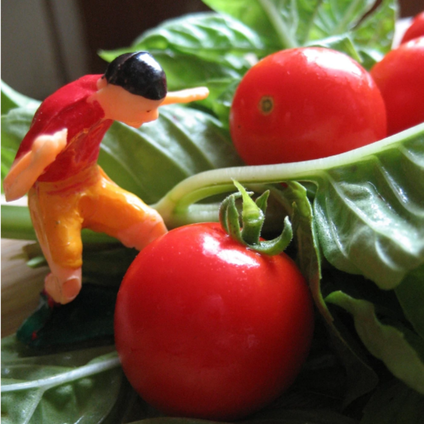 Hudson Valley Seeds Tiny Tim Tomato Seeds
