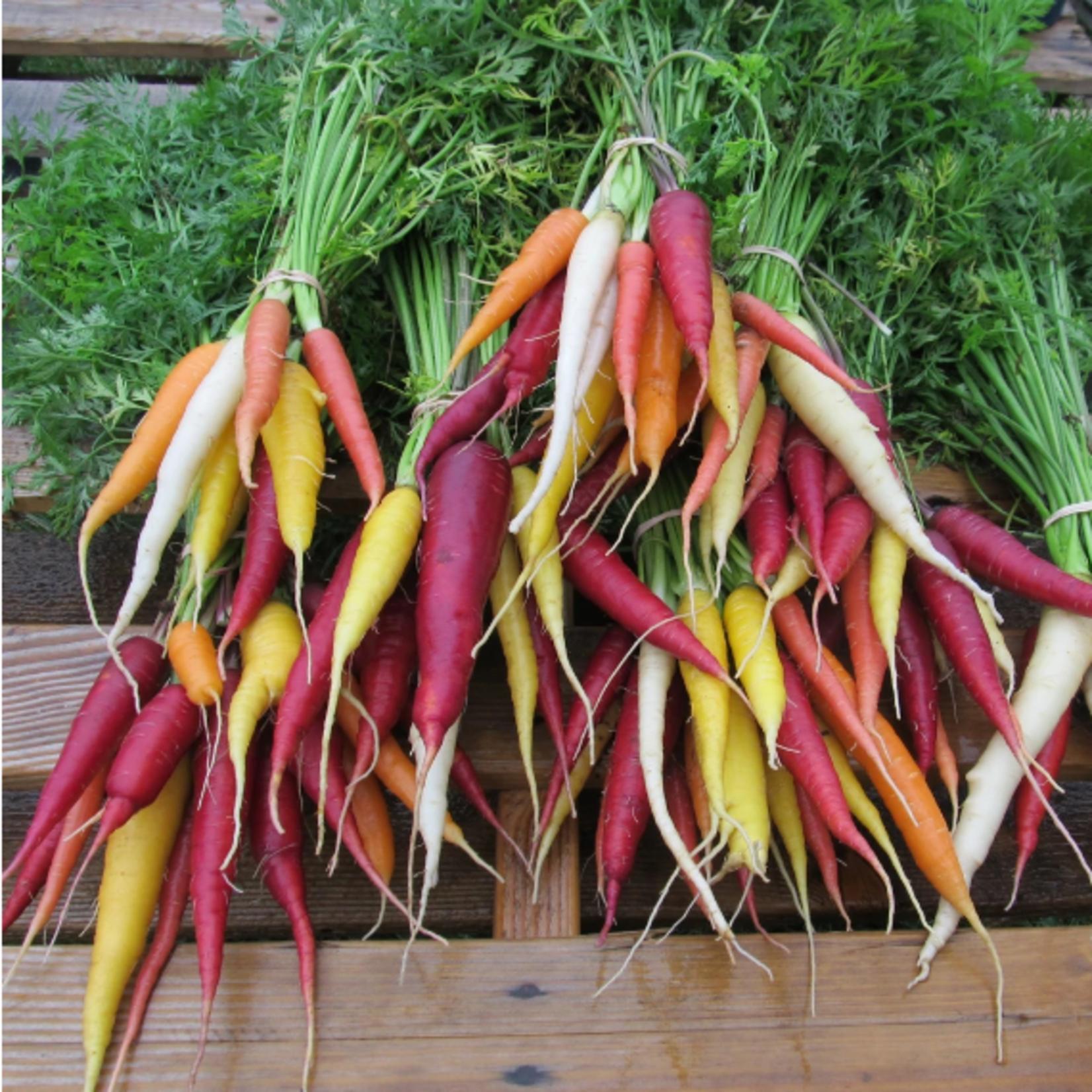 Hudson Valley Seeds Kaleidoscope Carrots Seeds