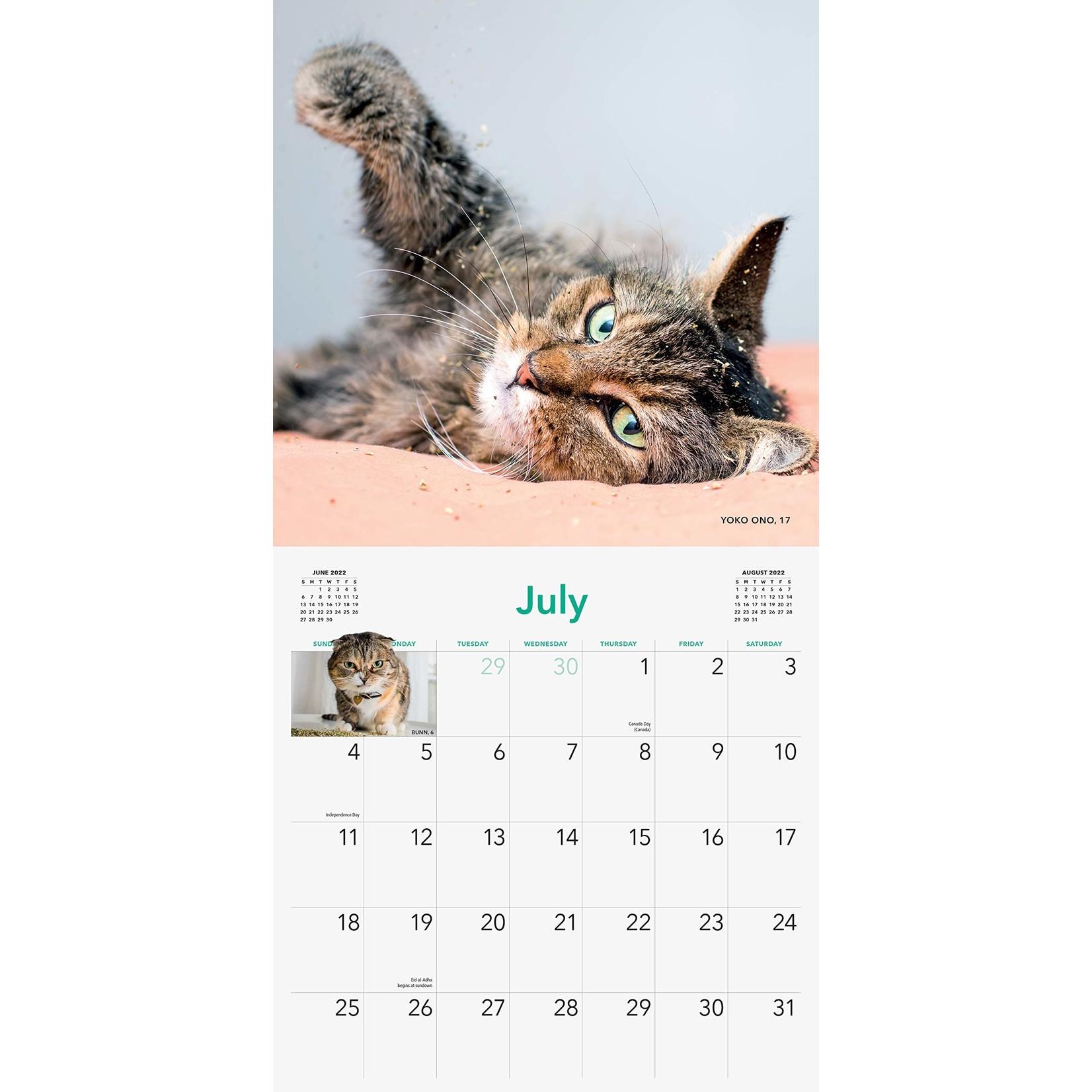 Workman Publishing Cats on Catnip Wall Calendar 2022