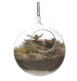 Chive Hanging Terrarium