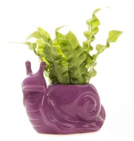 Chive Jett The Snail Planter