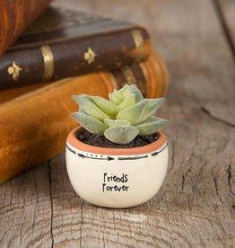 "Natural Life ""Friends Forever"" Succulent Keepsake"