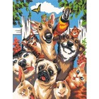 Dimensions . DMS Pet Animals Selfie  Paint By Numbers