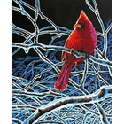 Dimensions . DMS Ice Cardinal 11 X 14 Paint By Number