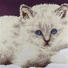 "Leisure Arts . LSA White Cat Diamond Art Intermediate Kit 12""X12"""