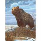 Royal (art supplies) . ROY Grizzly Bear - Paint By Number