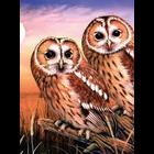 Royal (art supplies) . ROY PBN Tawny Owls