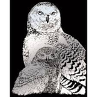 Royal (art supplies) . ROY Engrave Art Silver - Snowy Owl