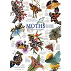 Outset Media . OUT Moth Collection 1000 pc Puzzle
